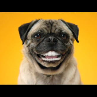Doggie Dentures